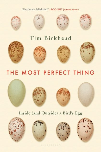 The Most Perfect Thing cover image