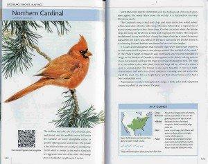 nasongbirds.cardinal.a