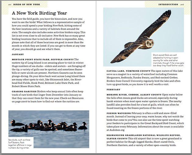 ny birding year