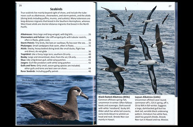offshore.seabirds