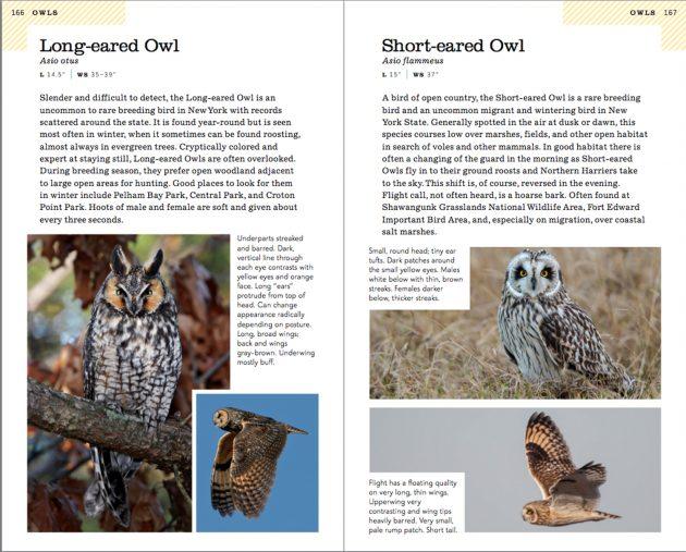 owls.630