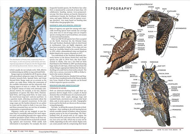 pages 10 11 topography owls