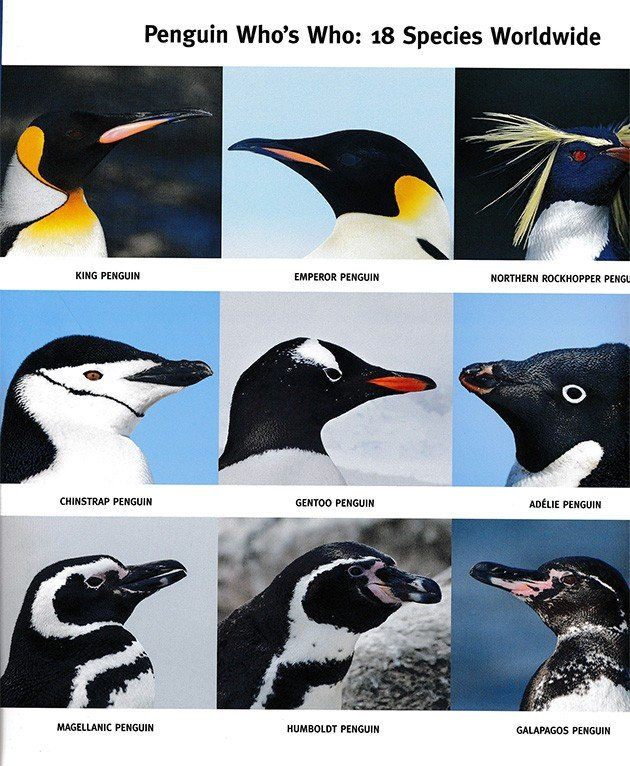 penguin whoswho.1