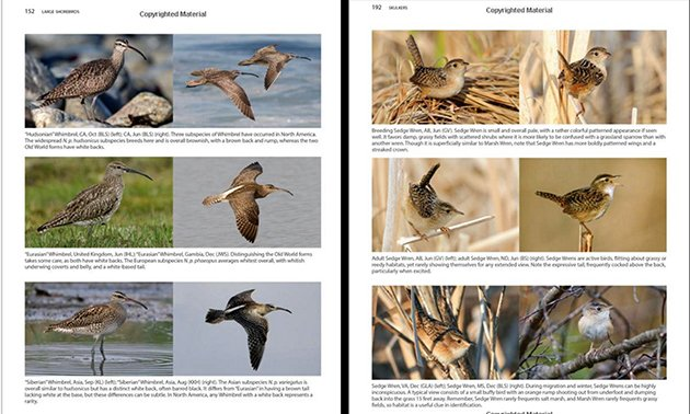 better birding photographs 2
