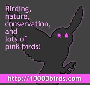 pinkweeklogo