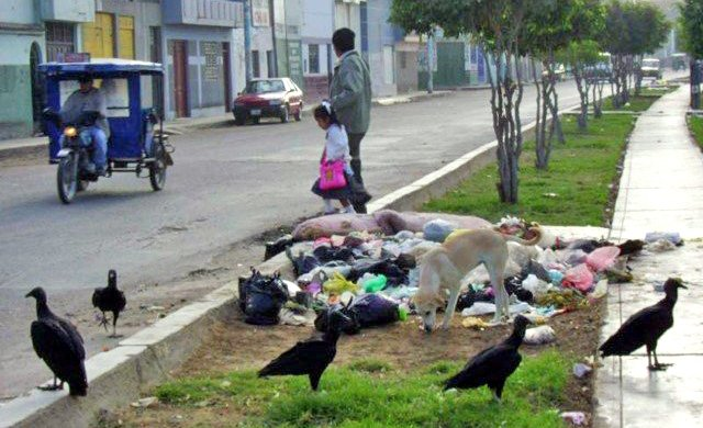 Vultures in city