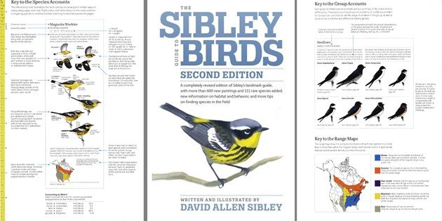 The Sibley Guide to Birds, Second Edition: A Review of an Iconic Guide in a New Edition