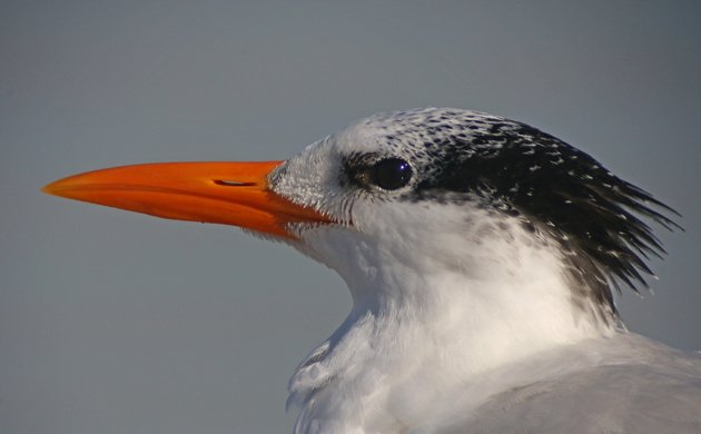 Are You Going to the 2015 Space Coast Birding and Wildlife Festival?