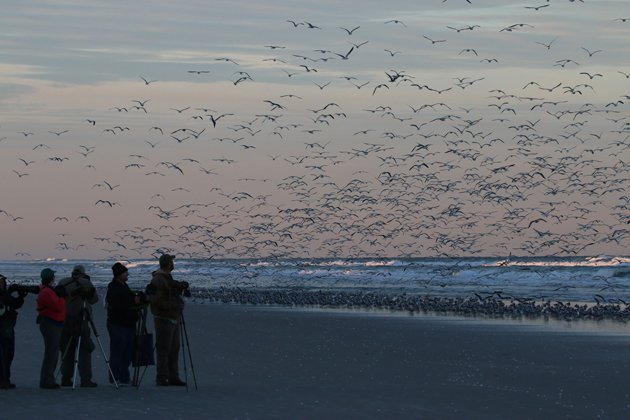 space coast gulls