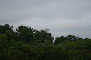 tree:bird