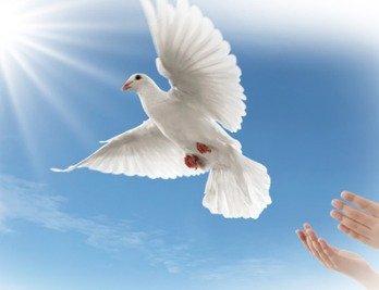 10 000 birds releasing white doves 10 000 birds