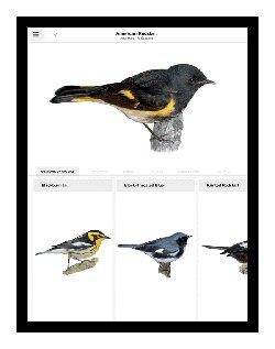 redstart warbler app