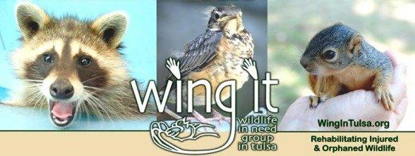 Wildlife Rehabilitation in Tulsa