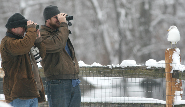 Master birders spotting their quarry